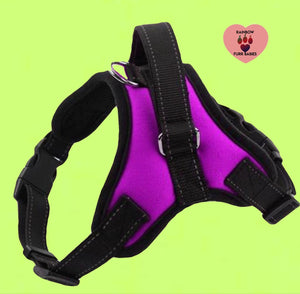 The Big Spot Harness Purple