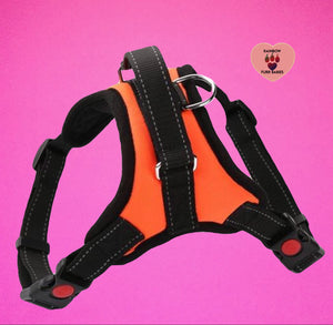 The Big Spot Harness Orange