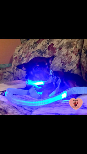 Nightlight Stroll Dog Leash - Blue