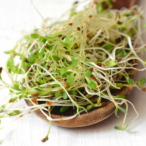 Get organic alfalfa sprouting seed 35 lbs organic high sprout germination edible seeds gardening hydroponics growing salad sprouts planting food storage more