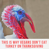 This Is Why Vegans Don't Eat Turkey on Thanksgiving