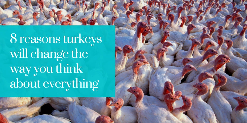 8 reasons turkeys will change the way you think about everything