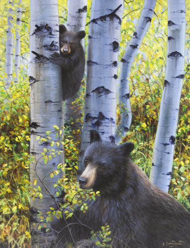 Black Bears in Aspen