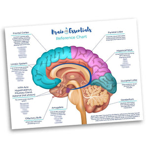 Brain Essentials Chart