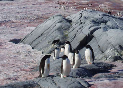 Noisy, Smelly Penguins