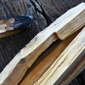"Ingredient Spotlight: Palo Santo - Ethically HARVESTED ""Holy Wood"""