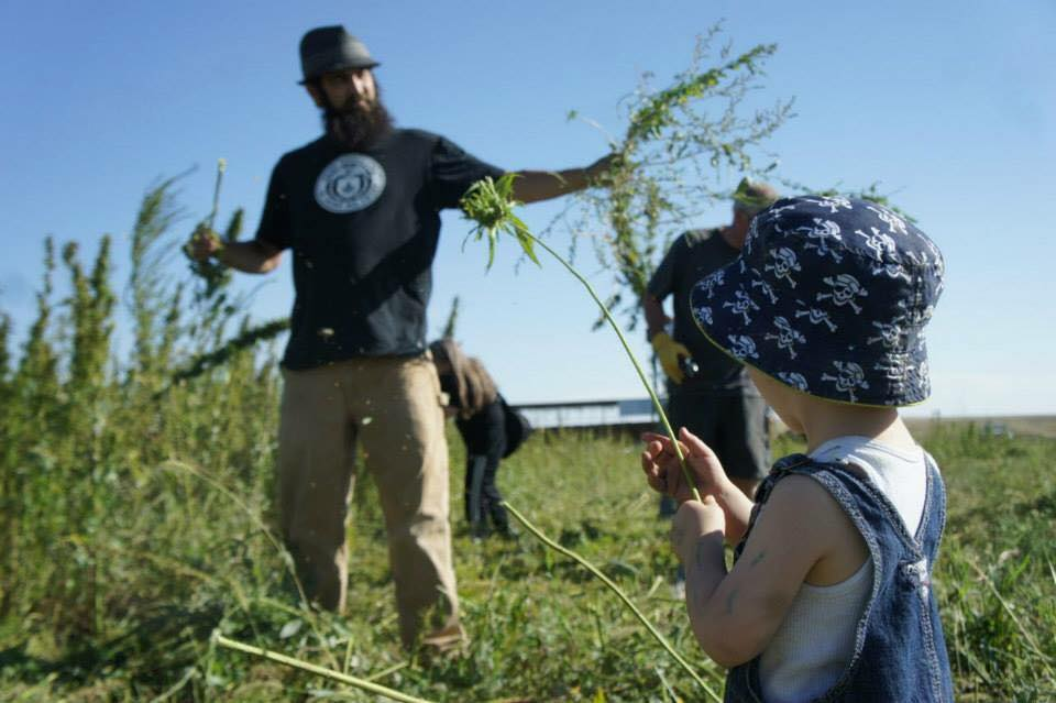 Adam Dunn from HoodLab joining Ryan Loflin hand-harvest the first American hemp crop in 60 years.