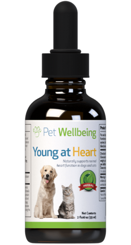 PW Young At Heart - Discover Dogs Inc