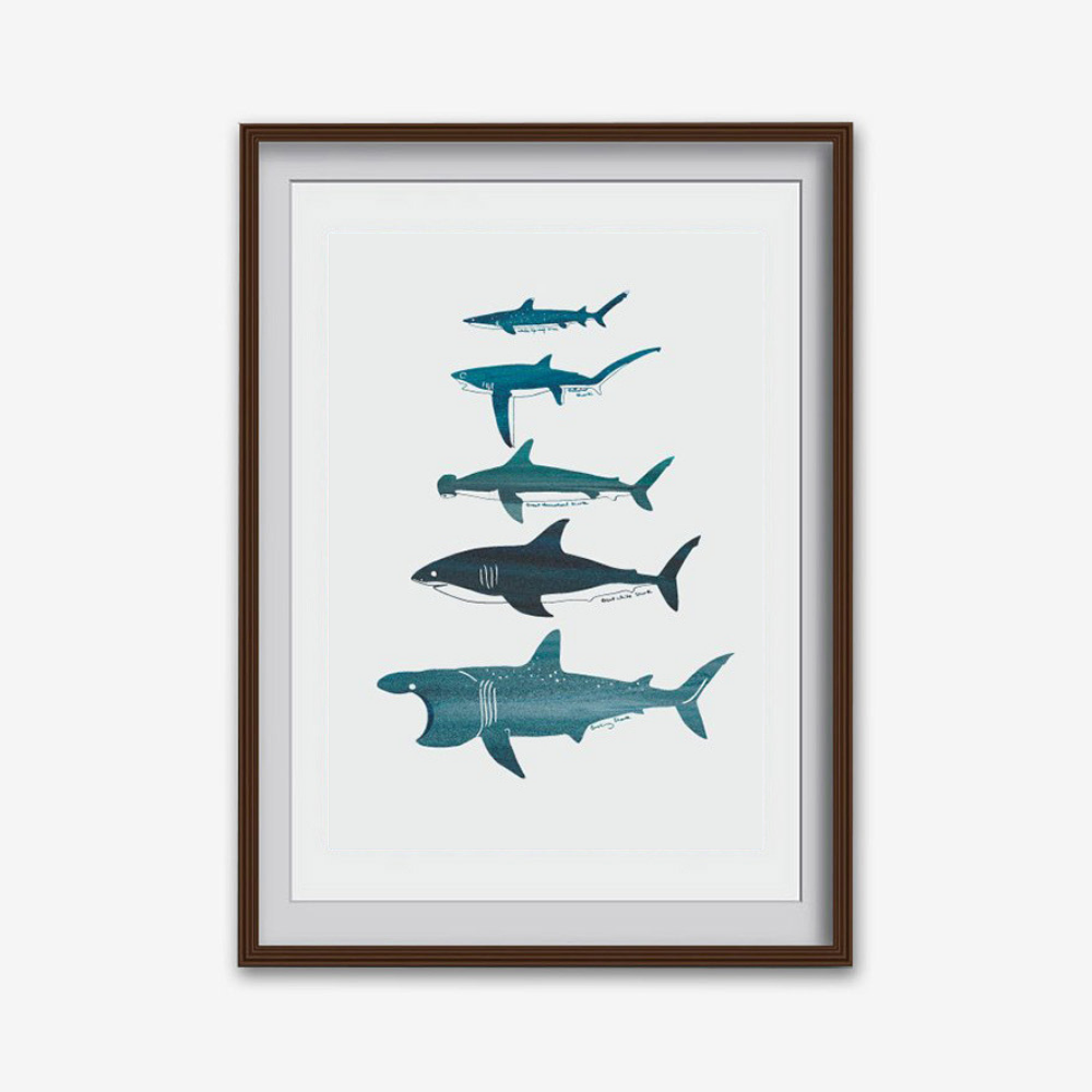 'Shark Species' Print (various sizes)