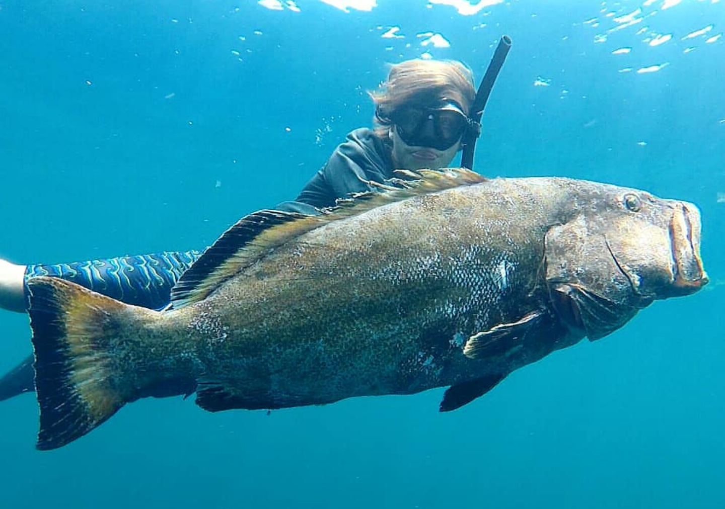 Polespear, Black Grouper, Headhunter Spearfishing, Spearfishing, Freediving,