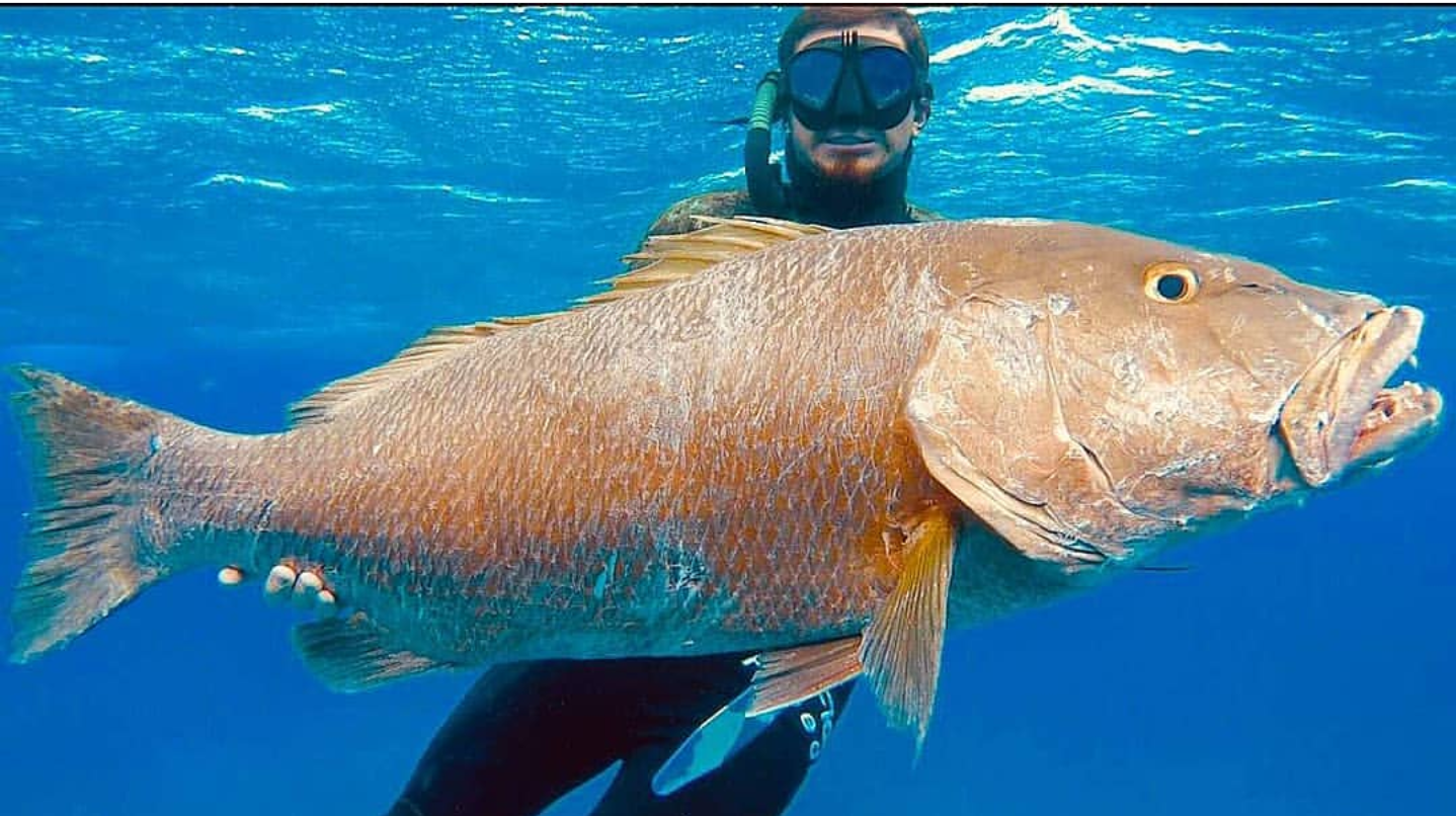 Polespear, Snapper, Headhunter Spearfishing, Spearfishing, Freediving,