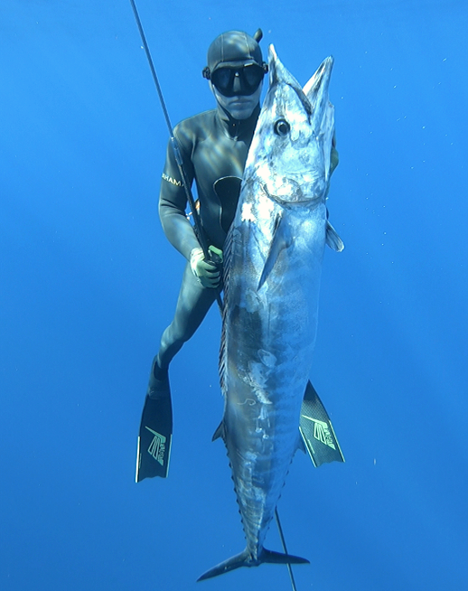 Spearfishing, freediving, polespear, headhunter spearfishing, grouper, freedive, hunting, fishing