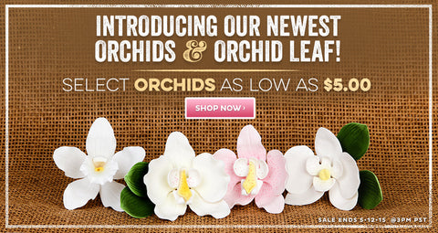 Sale of the Week - Orchid Sale