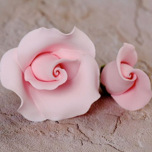 English Rose Blooms & Buds - Pink