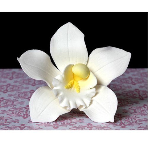 Cymbidium Orchids - White