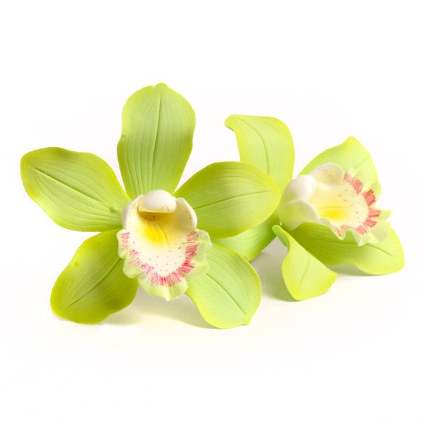 Green Cymbidium Orchids readymade sugarflowers made from gumpaste perfect for cake decorating fondant cakes.  Edible Cake Toppers.