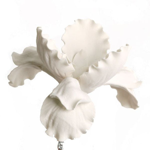 White Full Bloom Dutch Iris gumpaste sugarflower cake decorations perfect as a cake toppers for cake decorating fondant cakes and wedding cakes. Wholesale sugarflowers.