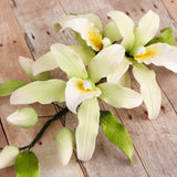 Miltonia Flavescens Sprays are gumpaste sugarflower cake decorations perfect as cake toppers for cake decorating fondant cakes and wedding cakes. Caljava wholesale cake supply.