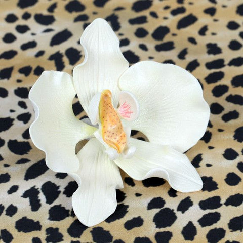 Moth Orchids - White