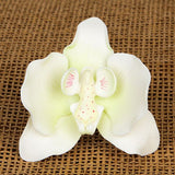 Moth Orchids - White with Green Hints