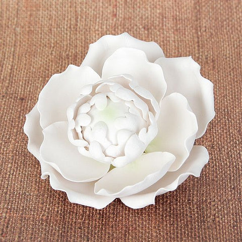 Blooming Peony - White