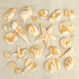"These fun edible fondant Marble Caramel Sea Shells are perfect additions for any ""Under the Sea"" themed cakes."