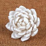 Snowball Succulent - White
