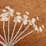 White Baby's Breath Gumpaste Flower Blossoms handmade cake decorations. Wholesale Cake Supply. Caljava