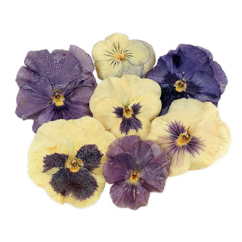 Edible Pansies & Violas