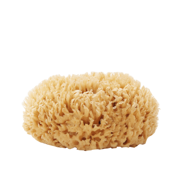 well kept Sea Sponge - large