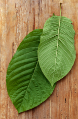 Kratom Mitragyna Speciosa imported from Borneo Indonesia. Always fresh, tested, and delivered quick to your door.