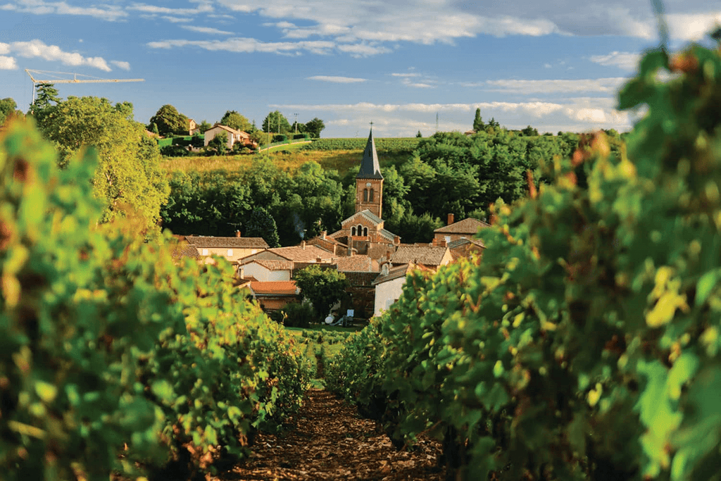 Virtual Wine tasting featuring a Cruise to Burgundy and Provence !