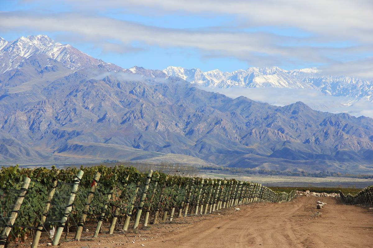 Virtual Wine Tasting and Travel to Argentina