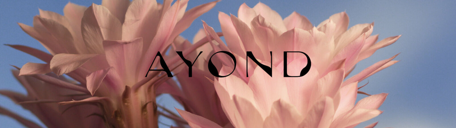 Ayond Skincare | Inspired by the Desert - Available at Sportique.com