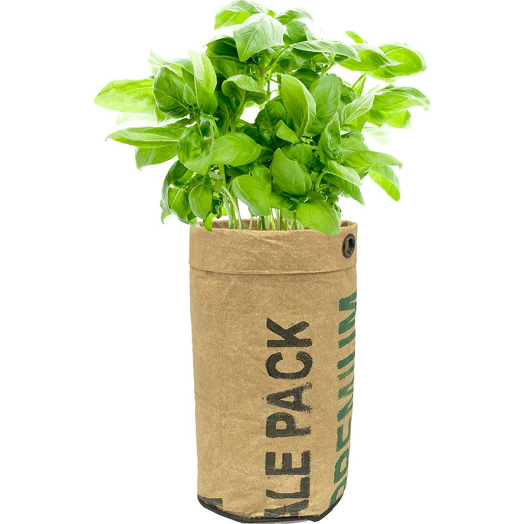 Urban Agriculture Organic Herb Grow Kit | Basil 20200