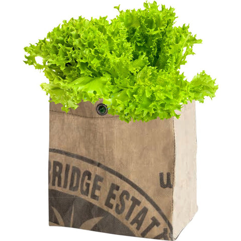 Urban Agriculture Organic Vegetable Grow Kit | Lettuce 30300