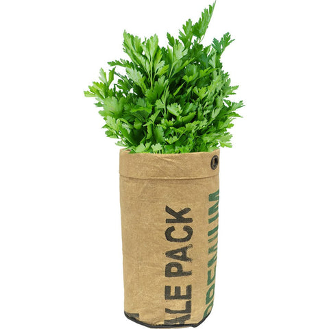 Urban Agriculture Organic Herb Grow Kit | Parsley 20205