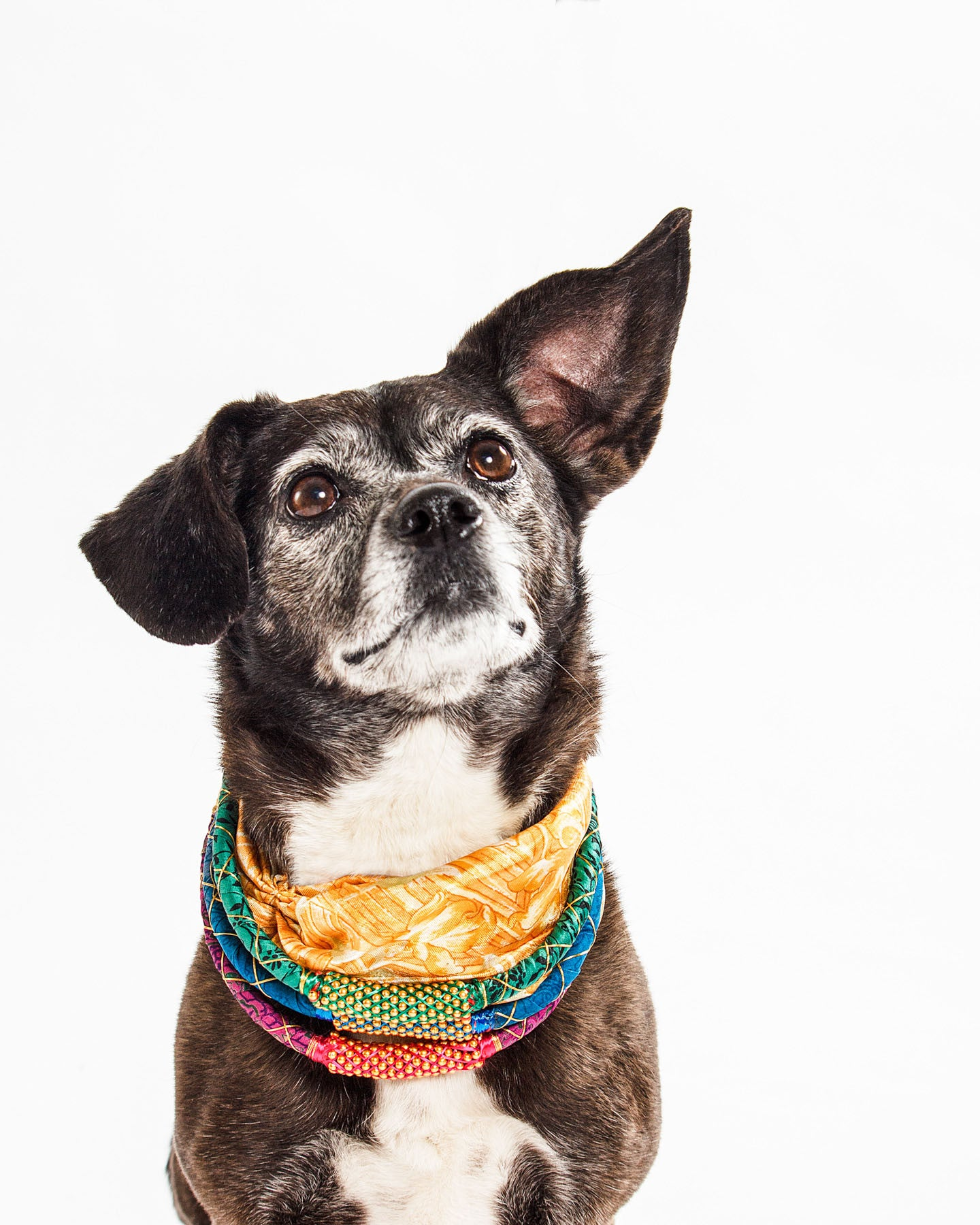 Sicily has big dreams of finding her forever home.  Wearing KabhiKabhi Necklaces  and the Anuragh Twist Headband.