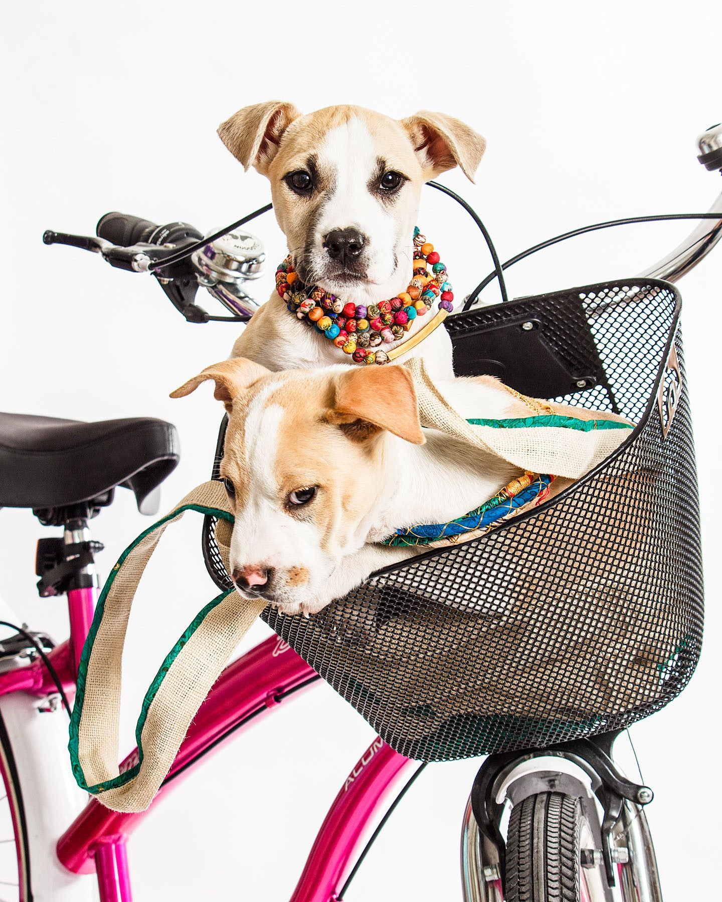 Puppies Sarah Jessica Barker and Fuzz Lightyear rode away with our hearts at our photoshoot. Here they are in the Who's Sari Now? Nivi Necklaces and Kabhi Kabhi Nilgiri Necklaces.