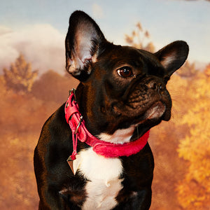 Pink short hair leather pet collar