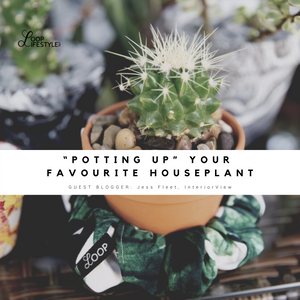 """Potting Up"" Your Favourite Houseplant"