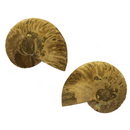 Ammonite - Opalized Matched Pair