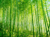 sustainable bamboo forest