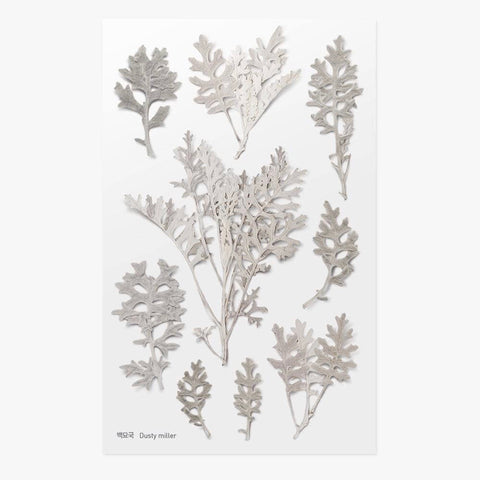 Pressed Flowers Sticker - Dusty Miller