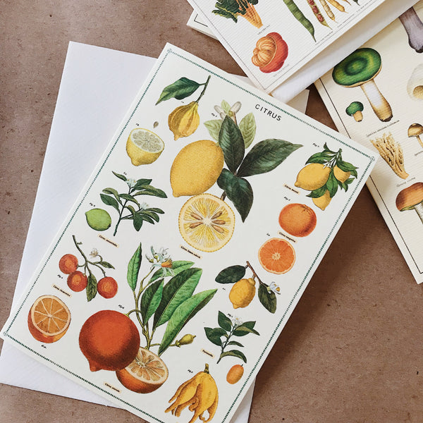 Cavallini Pocket Card - Citrus