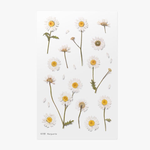 Pressed Flowers Sticker - Marguerite