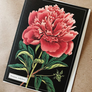 Cavallini Pocket Card - Paeonia