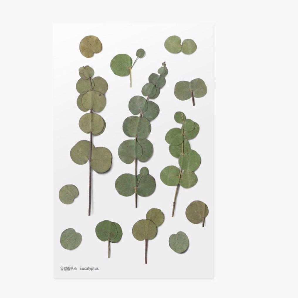 Pressed Flowers Sticker - Eucalyptus