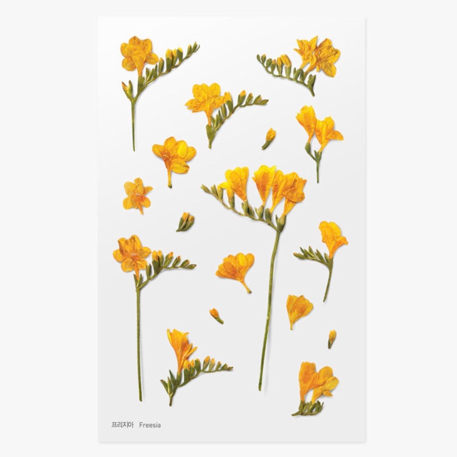 Pressed Flowers Sticker - Freesia