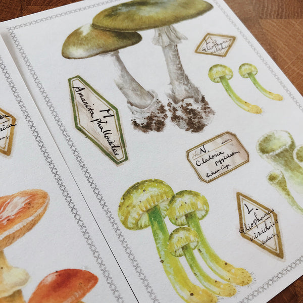 LCN Mushroom Washi Sticker Set